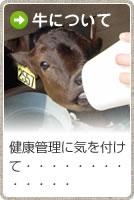 牛への取組