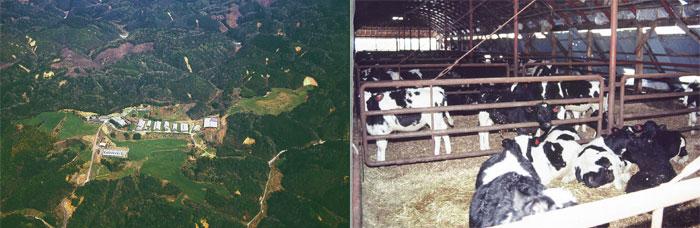 航空写真・旧牛舎